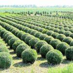 Veelgebruikte planten in de Nederlandse tuin
